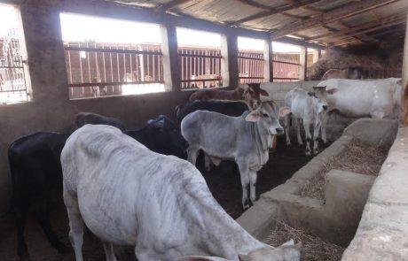 Marokko: Verband für Milchprodukte drängt Landwirtschaftsminister Akhannouch nach einer Lösung in der Boykott Kampagne
